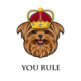 Yorkshire terrier dog. Crown icon. Royal symbol. You rule inscription. Vector. Royalty Free Stock Image
