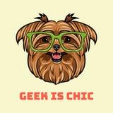 Yorkshire Terrier Dog geek. Smart glasses. Geek is chic lettering. Vector. Yorkshire Terrier Dog geek. Smart glasses. Geek is chic lettering. Vector royalty free illustration