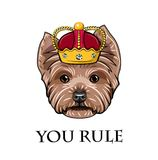 Yorkshire Terrier dog king. Crown badge. Yorkshire terrier queen. You rule inscription. Vector. Yorkshire Terrier dog king. Crown badge. Yorkshire terrier queen Stock Image