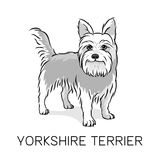 Yorkshire Terrier dog vector illustration. Cartoon Yorkshire Terrier sketch. Funny dog vector illustration Stock Images