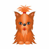 Yorkshire Terrier dog. Vector image of a cute purebred dogs in cartoon style Stock Image