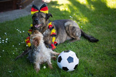 Yorkshire terrier and a german sheperd with football Stock Images