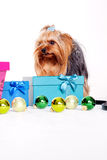 Yorkshire terrier with gift boxes Royalty Free Stock Photos