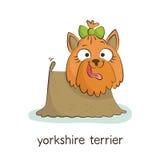 Yorkshire Terrier Hundtecken på vit Arkivbilder