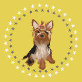 Yorkshire terrier  illustration. Beautiful yorkshire terrier vector illustration Stock Image