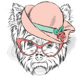 Yorkshire terrier in a ladies` hat and sunglasses. Vector illustration Stock Photos