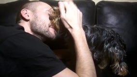 Yorkshire Terrier leckt das Gesicht seines Meisters stock video