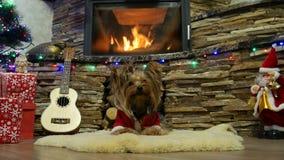 Yorkshire Terrier lindo cerca de un árbol de navidad almacen de metraje de vídeo