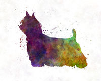 Yorkshire Terrier Long Hair in watercolor. Yorkshire Terrier Long Hair in artistic abstract watercolor Royalty Free Stock Photo