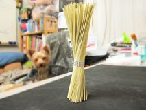Yorkshire Terrier Looking at bundles of raw noodles stock image