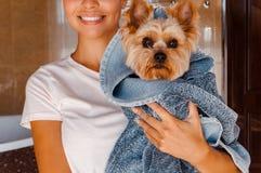 Yorkshire terrier - melhor amigo imagens de stock