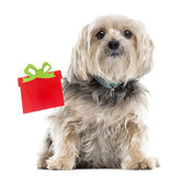Yorkshire Terrier next to a Christmas box, isolated on white Royalty Free Stock Photography