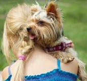 Yorkshire terrier no ombro da menina da criança de 6 anos Vista à esquerda Fotografia de Stock Royalty Free
