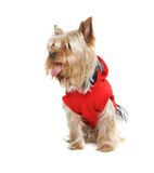 Yorkshire terrier over white Royalty Free Stock Image