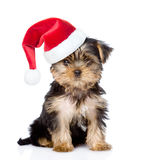 Yorkshire Terrier puppy in red santa hat looking at camera .  on white Stock Photo