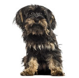 Yorkshire terrier puppy, sitting, facing, isolated Royalty Free Stock Image