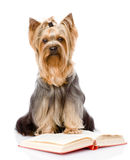 Yorkshire Terrier read book.  on white background Stock Images