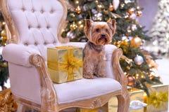 Dog new year royalty free stock photos