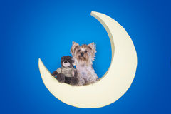 Yorkshire terrier sleeping on the moon Royalty Free Stock Photo