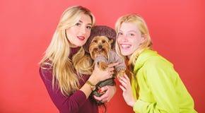 Yorkshire Terrier traken kocha socjalizacj? Blondynek dziewczyny adoruj? ma?ego ?licznego psa Kobiety u?ci?ni?cia Yorkshire terie obrazy stock