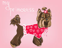 Yorkshire Terrier. Vector illustration for your design Stock Images