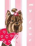 Yorkshire Terrier. Yorkshire Terrier in vector for your design Royalty Free Stock Images