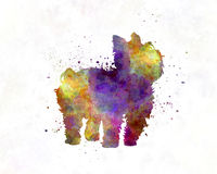 Yorkshire Terrier in watercolor. Yorkshire Terrier in artistic abstract watercolor Stock Image