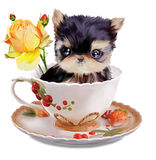 Yorkshire Terrier watercolor painting. Yorkshire Terrier sits in a Cup Royalty Free Stock Photography