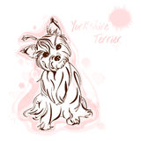 Yorkshire terrier watercolor Royalty Free Stock Photography