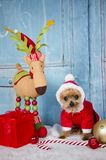 Yorkshire-Terrierhund, der Sankt-Ausstattung trägt lizenzfreies stockfoto