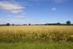 Yorkshire vetefält Royaltyfria Foton