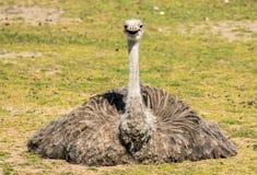 Emu happy in the sun stock photos