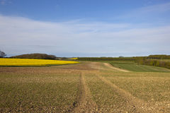 Yorkshire wolds agriculture. Yorkshire wolds agricultural land with canola crop and cultivated soil under a blue sky in springtime Stock Photos