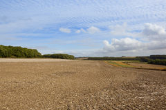 Yorkshire wolds agriculture. Harvested fields in scenic agricultural land with woodland under a blue mackrel sky in late summer Stock Images