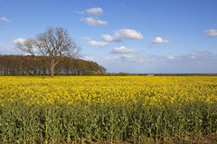 Yorkshire wolds agriculture Royalty Free Stock Images