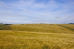 Yorkshire wolds barley Stock Photography