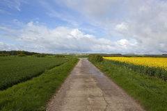 Yorkshire wolds bridleway Royalty Free Stock Images