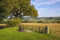 Yorkshire-Wolds, die Sitz ansehen Lizenzfreie Stockfotos