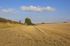 Yorkshire-Wolds ernteten Weizenfeld Lizenzfreie Stockbilder