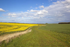 Yorkshire wolds footpath Royalty Free Stock Image