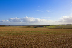 Yorkshire wolds harvest Royalty Free Stock Photography