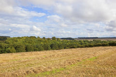 Yorkshire wolds harvest Royalty Free Stock Photos