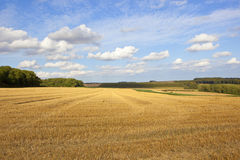 Yorkshire wolds harvest time Royalty Free Stock Image