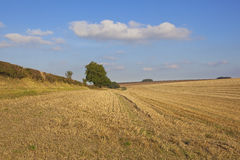 Yorkshire wolds harvested wheat field Royalty Free Stock Images