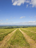 Yorkshire wolds hay field Royalty Free Stock Photo