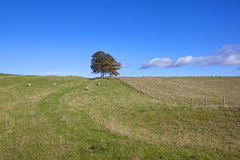 Yorkshire wolds meadows Stock Photo