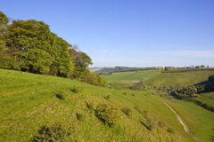 Yorkshire wolds pasture Royalty Free Stock Photography