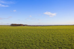 Yorkshire wolds wheat Stock Images