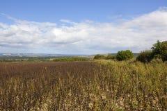 Yorkshire-Woldsbohnenernte Stockbilder
