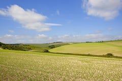 Yorkshire-Woldserbsenernte Stockbild